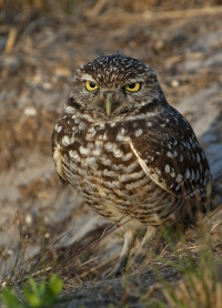 owlbu-d13-2