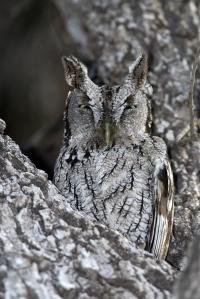 owles-d21-2